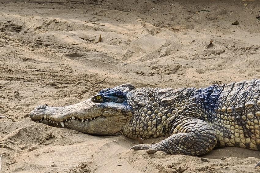 Với 10x cũng có thể thấy rõ được từng lớp vẩy của cá sấu