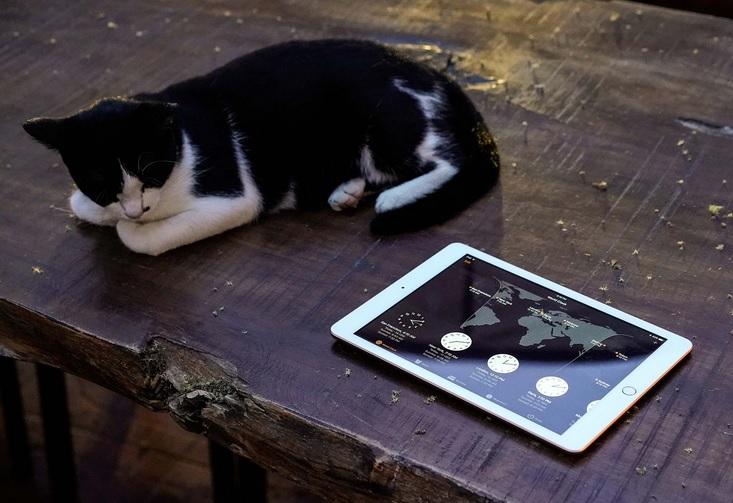 iPad 2017 và con mèo